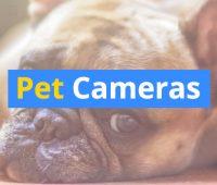 cameras-for-pets