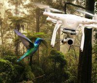 drone-bird-attacks
