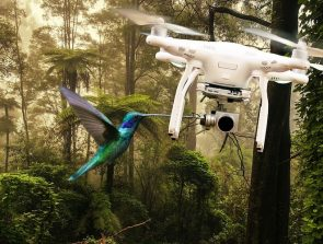How to Avoid Bird Attacks on Your Drone