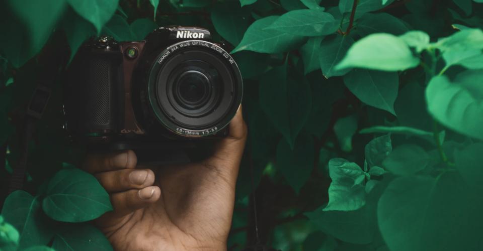 6 Best Nikon Wildlife Lens Picks for 2020
