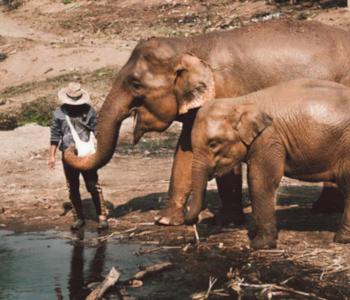 Wildlife conservationists