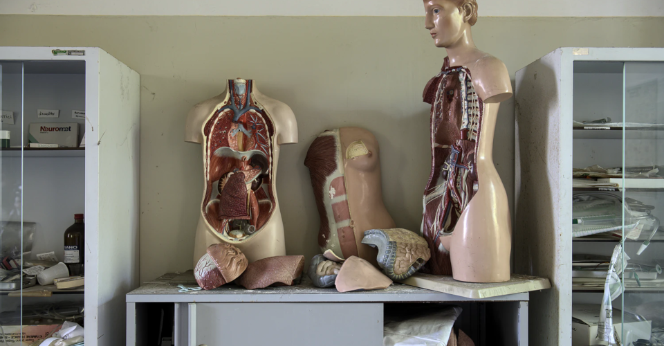 3D-Printed Organs: What They Are and Notable Milestones
