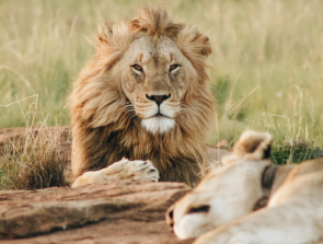 The Role of 3D Printing in Wildlife Conservation